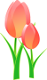 tulips-152832_960_720